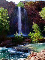 "Havasu Falls from its base, through a cottonwood ""snow"""